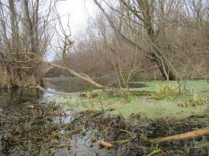 Hévíz-patak élővilága